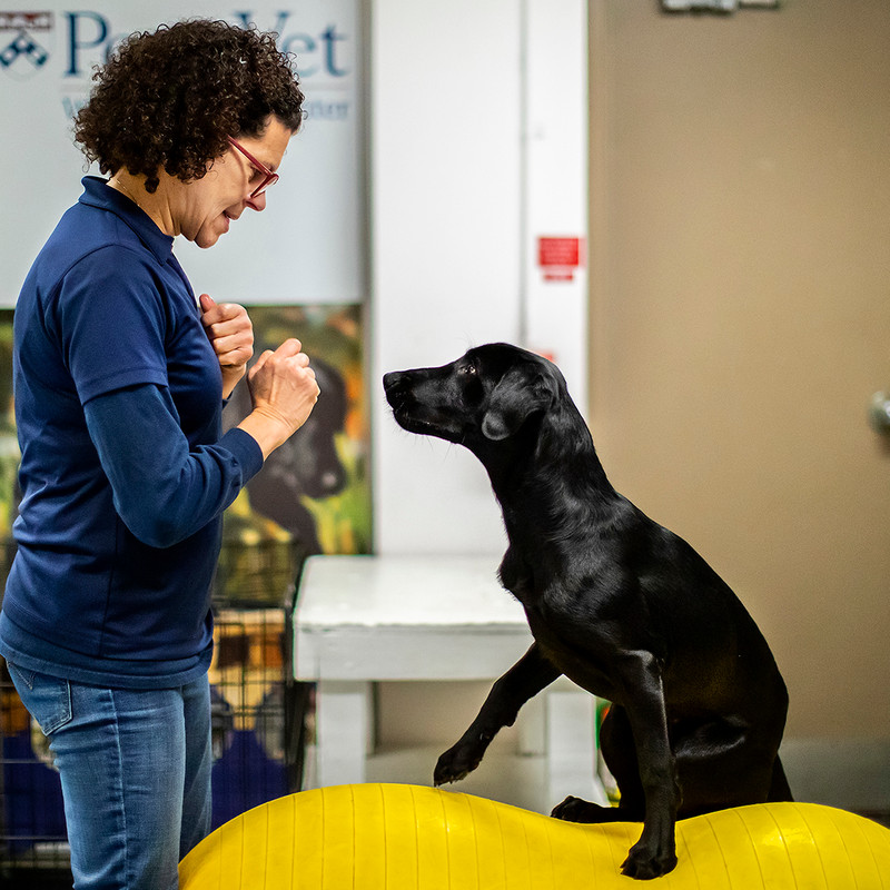 Toledo Native Leading Research On How Dogs Detect Covid 19 Wnwo